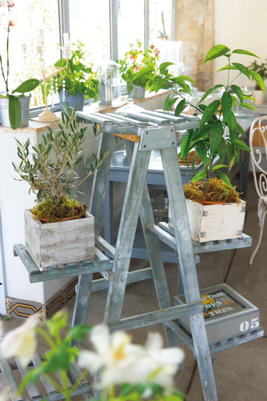 16 ideas f ciles y creativas para decorar la casa - Plantas para patio ...