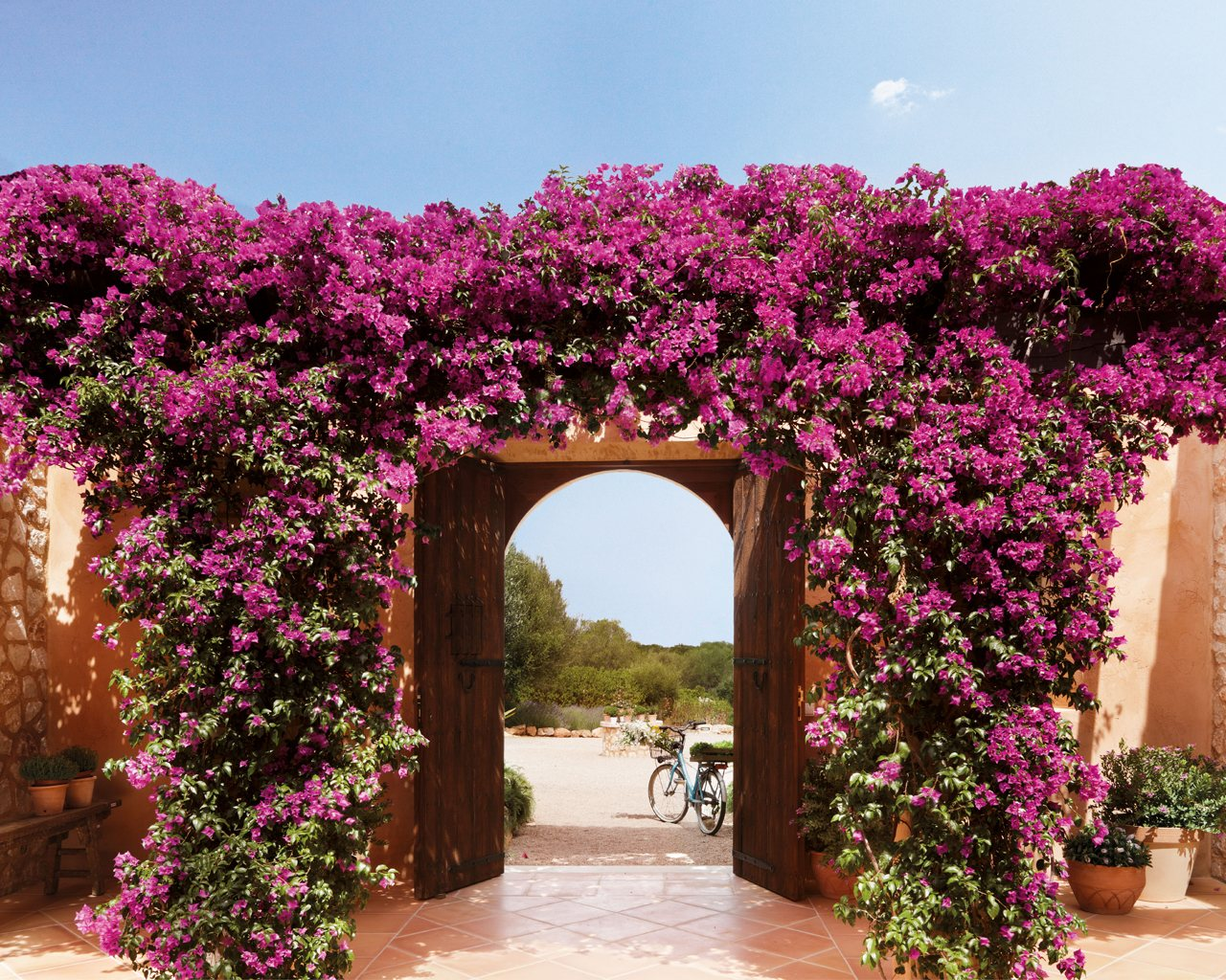 Una casa en mallorca rodeada de jard n y buganvillas - Plantas trepadoras de sol ...
