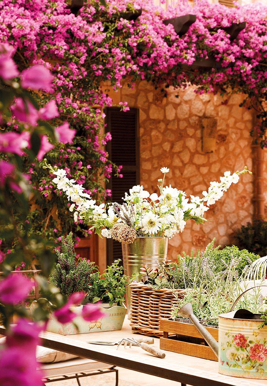 Relajarse bajo el aroma de la buganvilla - La buganvilla ...