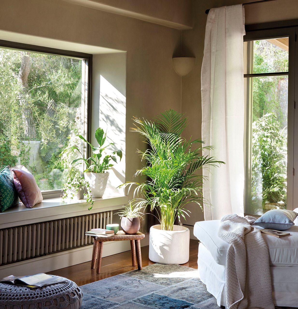 Plantas que purifican el aire for Plantas salon decoracion