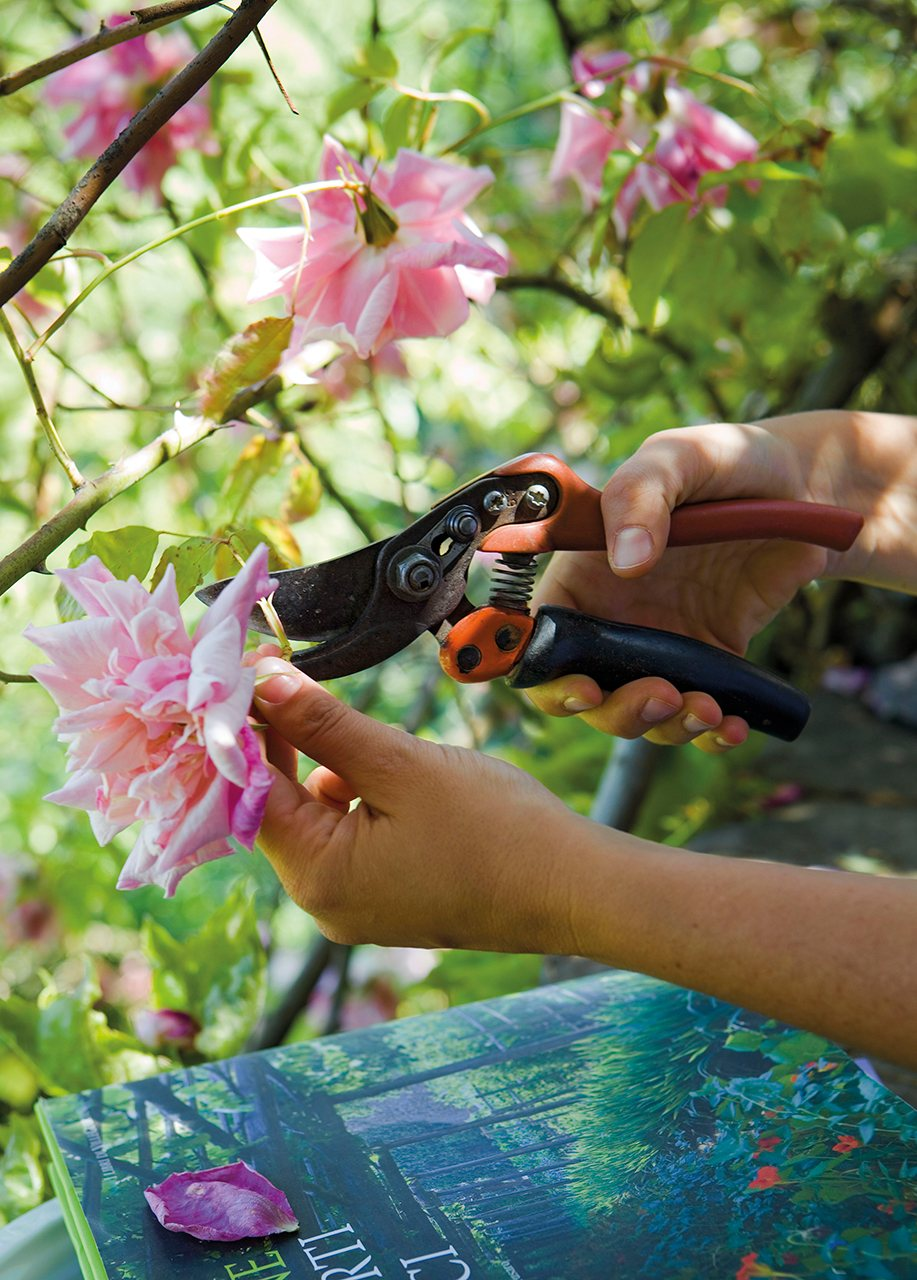 Persona podando flores