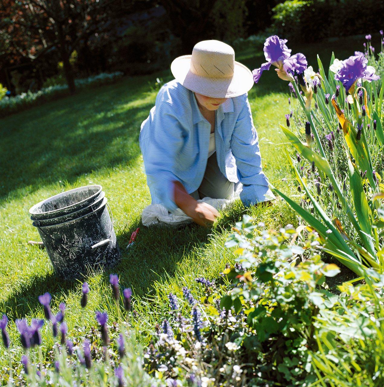 Gu a para poner tu jard n a punto esta primavera - Arboles y plantas de jardin ...