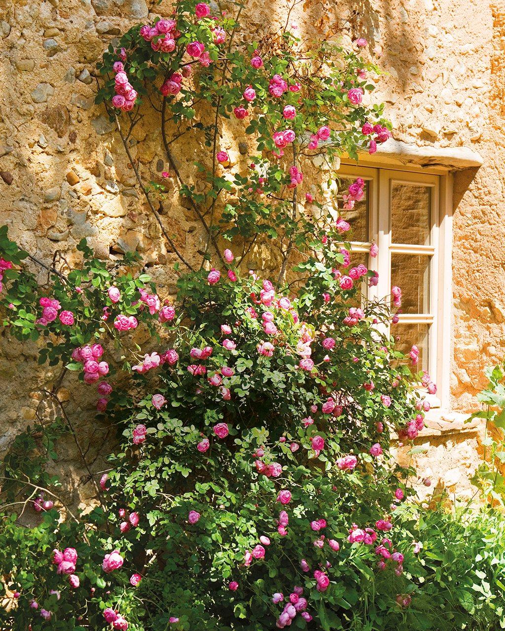 Entre vino y rosas el jard n de la alegr a for Fachadas con plantas trepadoras