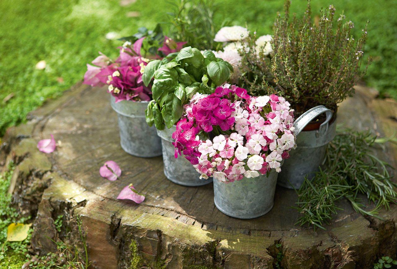 Ventanas balcones macetas maceteros patios del mundo - Poda de hortensias en maceta ...