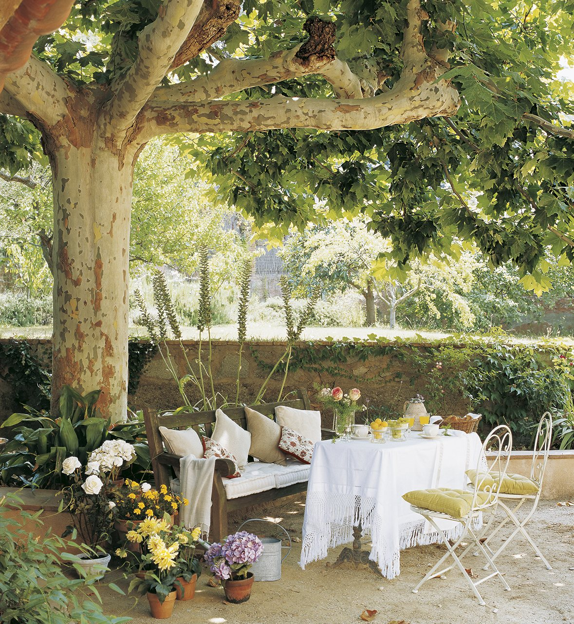 La paisajista responde for Arboles de jardin para sombra