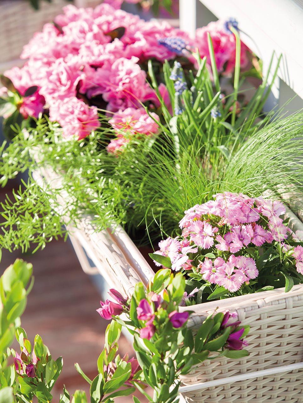 Jardineras con plantas perfect plantas de diferentes for Tipos de jardineras