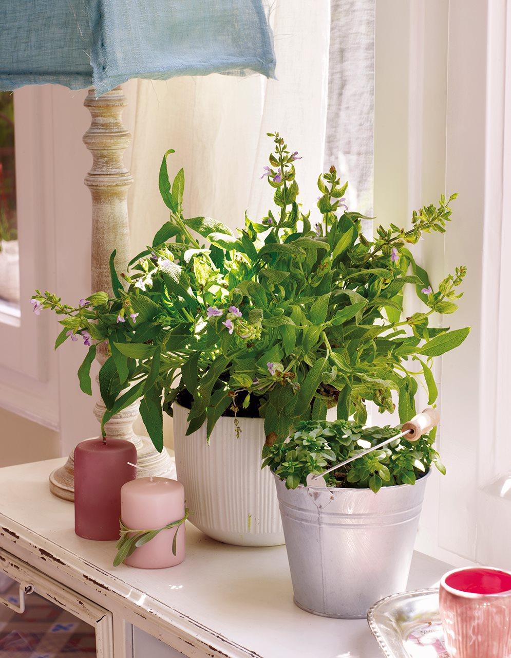 Plantas de interior aromaticas latest plantas de interior for Plantas aromaticas de interior