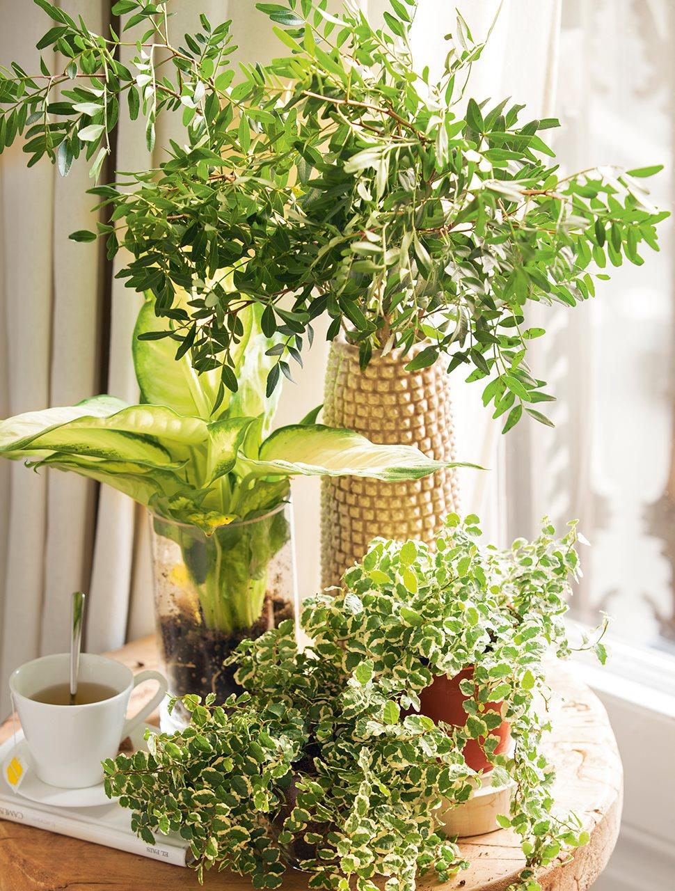 Неприхотливые цветы для дома фото и названия