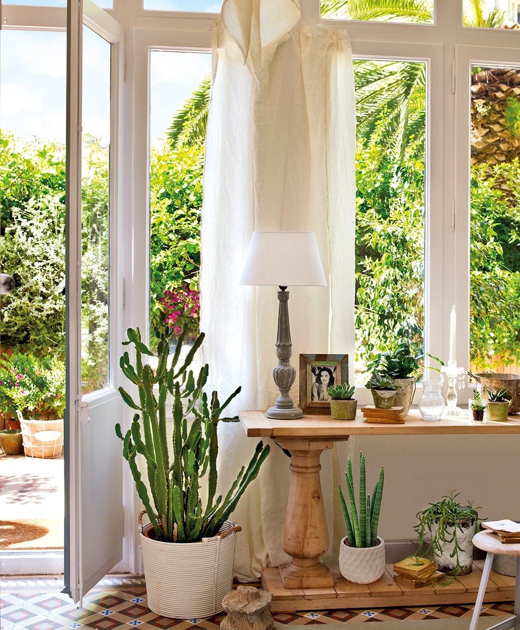 Plantas f ciles de cuidar for Cactus cuidados exterior