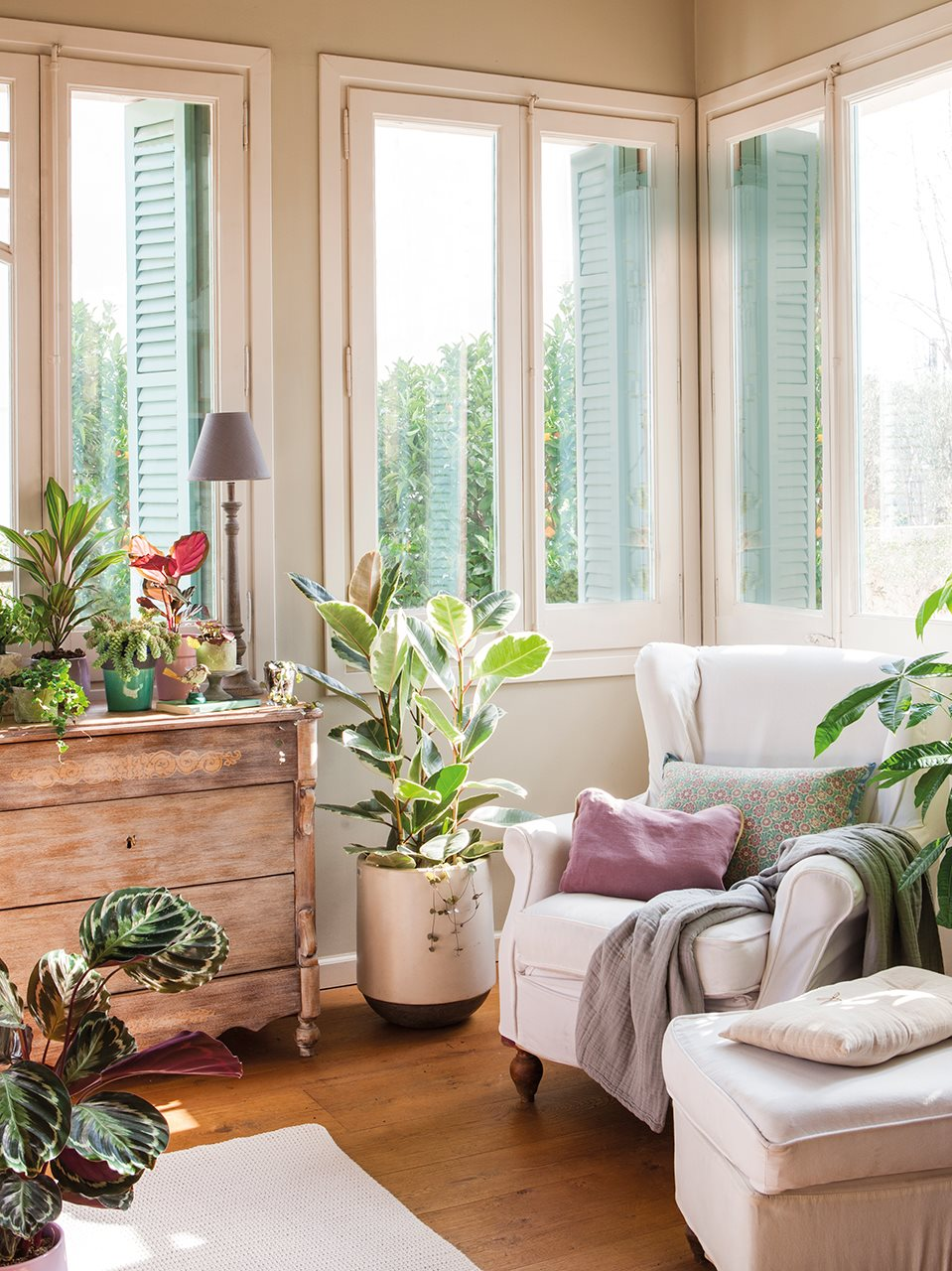 C mo decorar con plantas for Decoracion con plantas en living