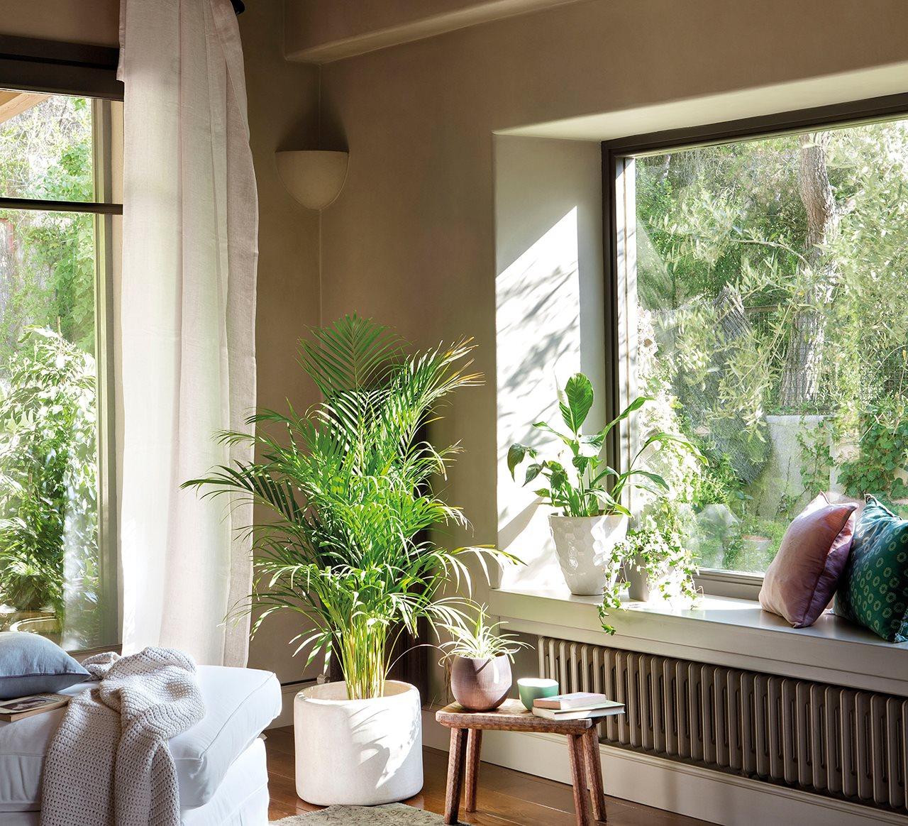 C mo decorar con plantas - Plantas para dormitorio ...