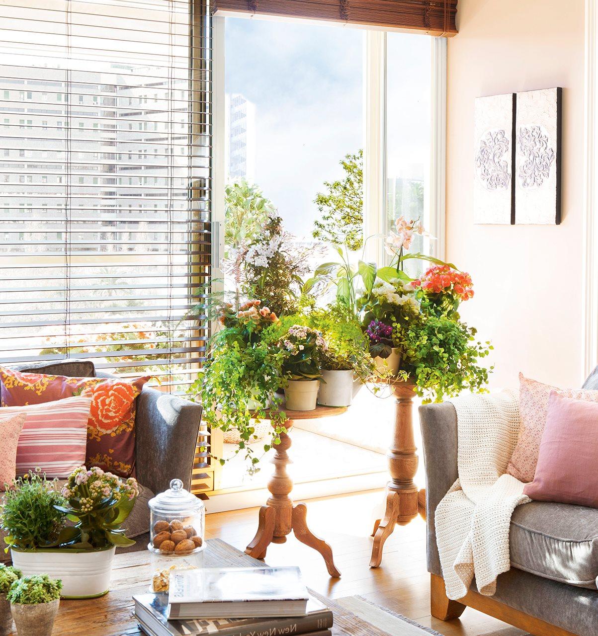C mo decorar con plantas - Plantas de interior para salon ...