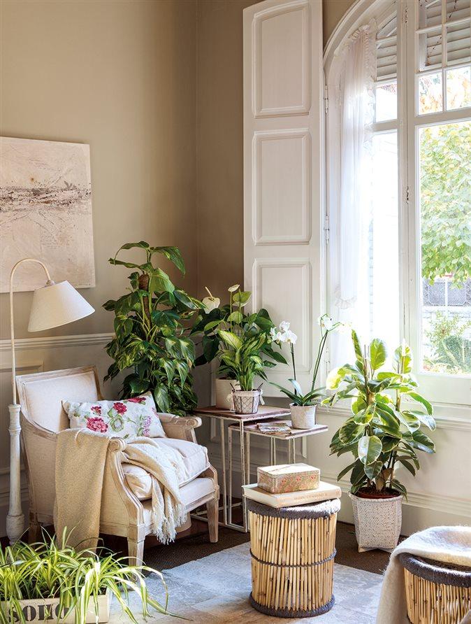 Decora con plantas sin mucho esfuerzo for Plantas de interior limpian aire