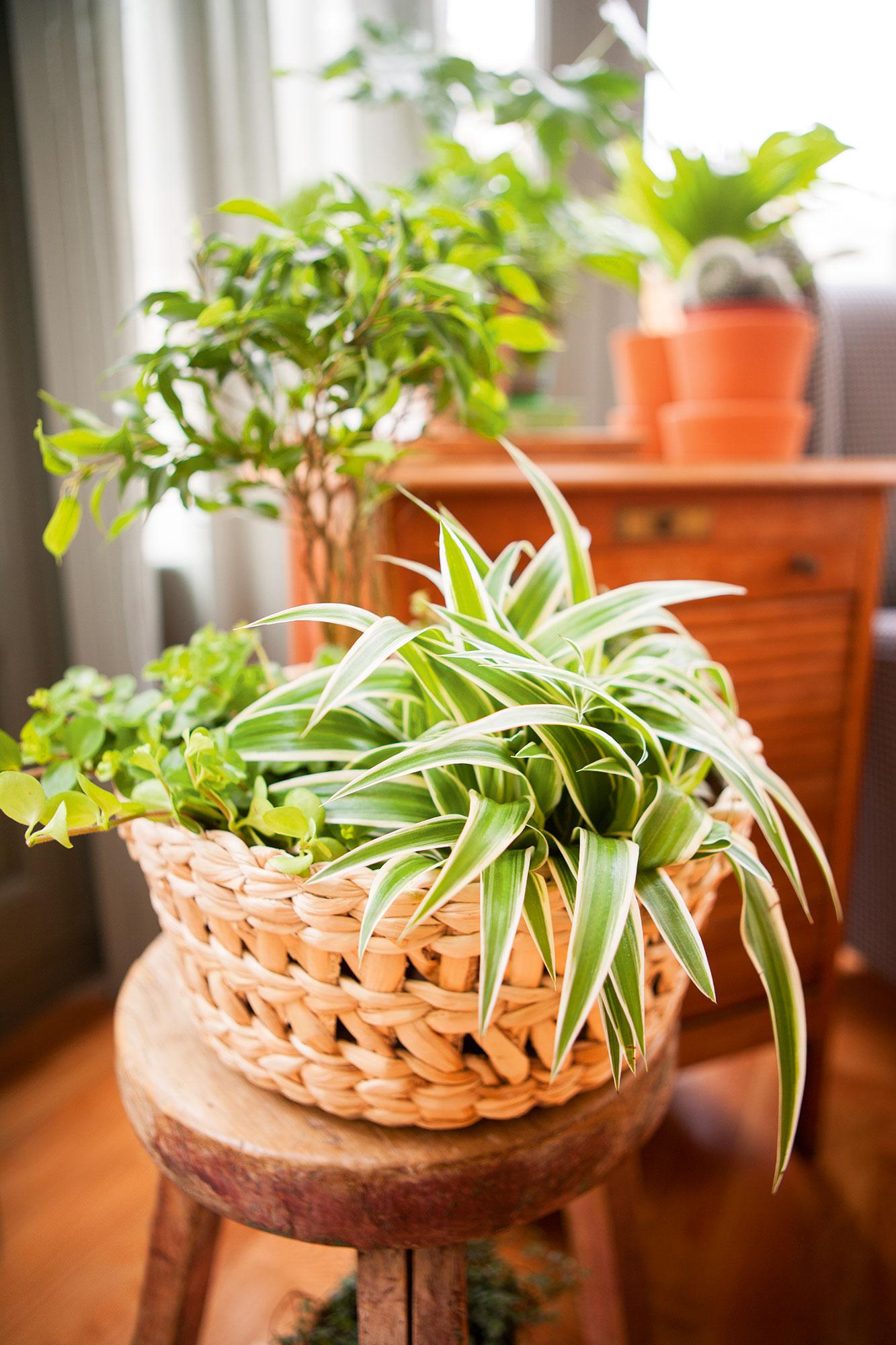 Una Casa Sana Plantas Que Limpian El Aire Y Purifican El Ambiente ~ Plantas Que Limpian El Ambiente