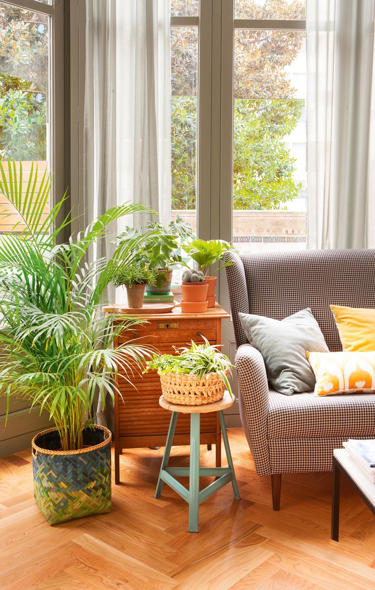 Una casa sana plantas que limpian el aire y purifican el - Plantas para salon ...