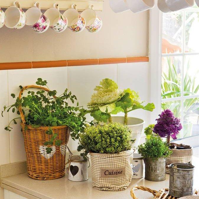 Una casa sana plantas que limpian el aire y purifican el - Plantas en la cocina ...