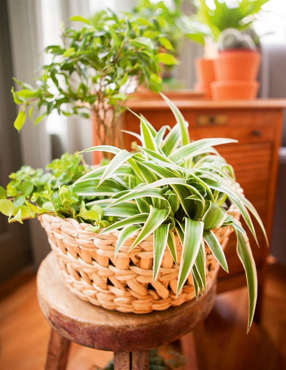 Plantas exterior sombra maceta affordable with plantas - Macetas de exterior ...
