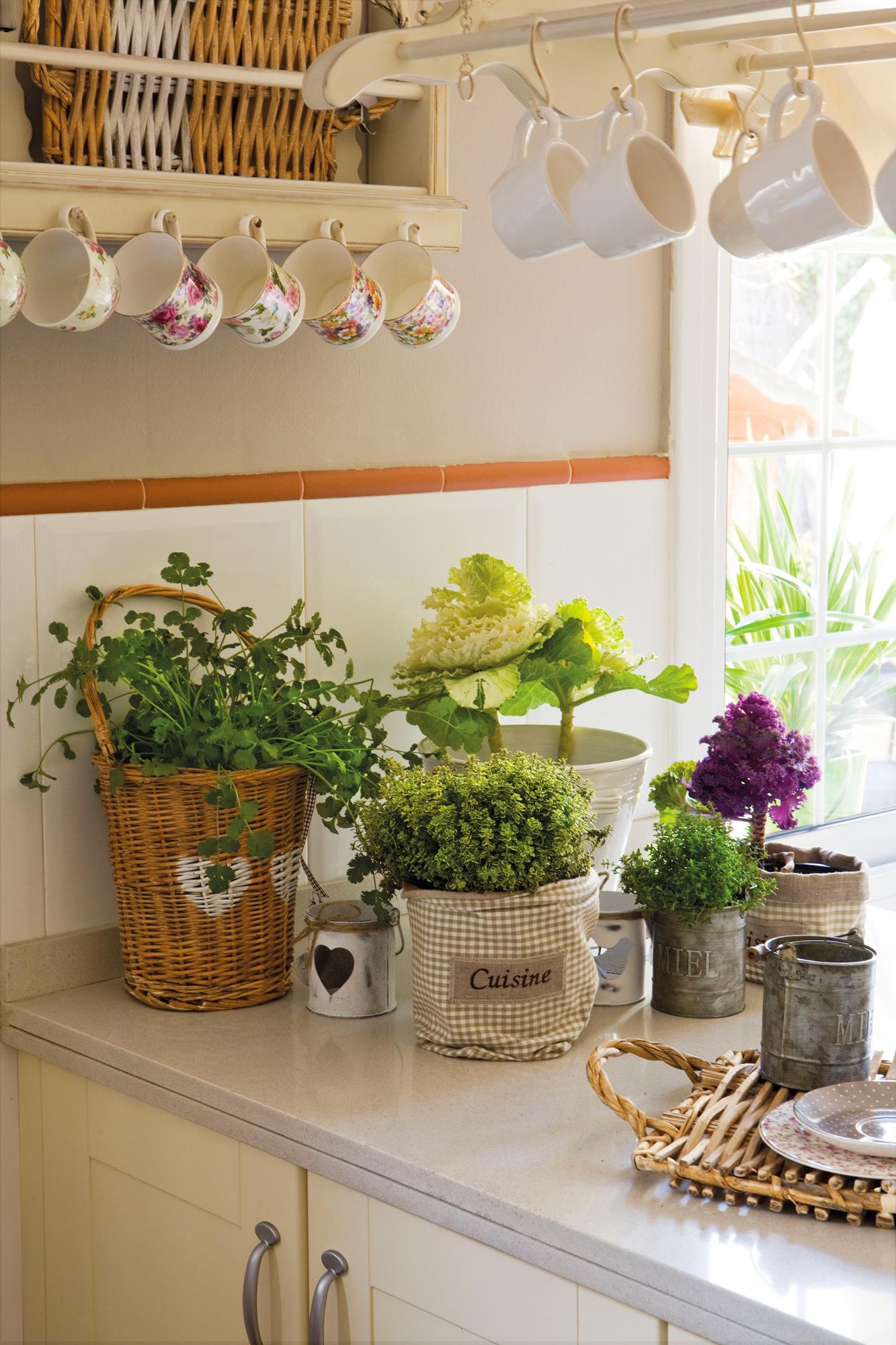 Arboles Para Decorar Aulas.Una Acogedora Casa Llena De Plantas Por Todas Partes