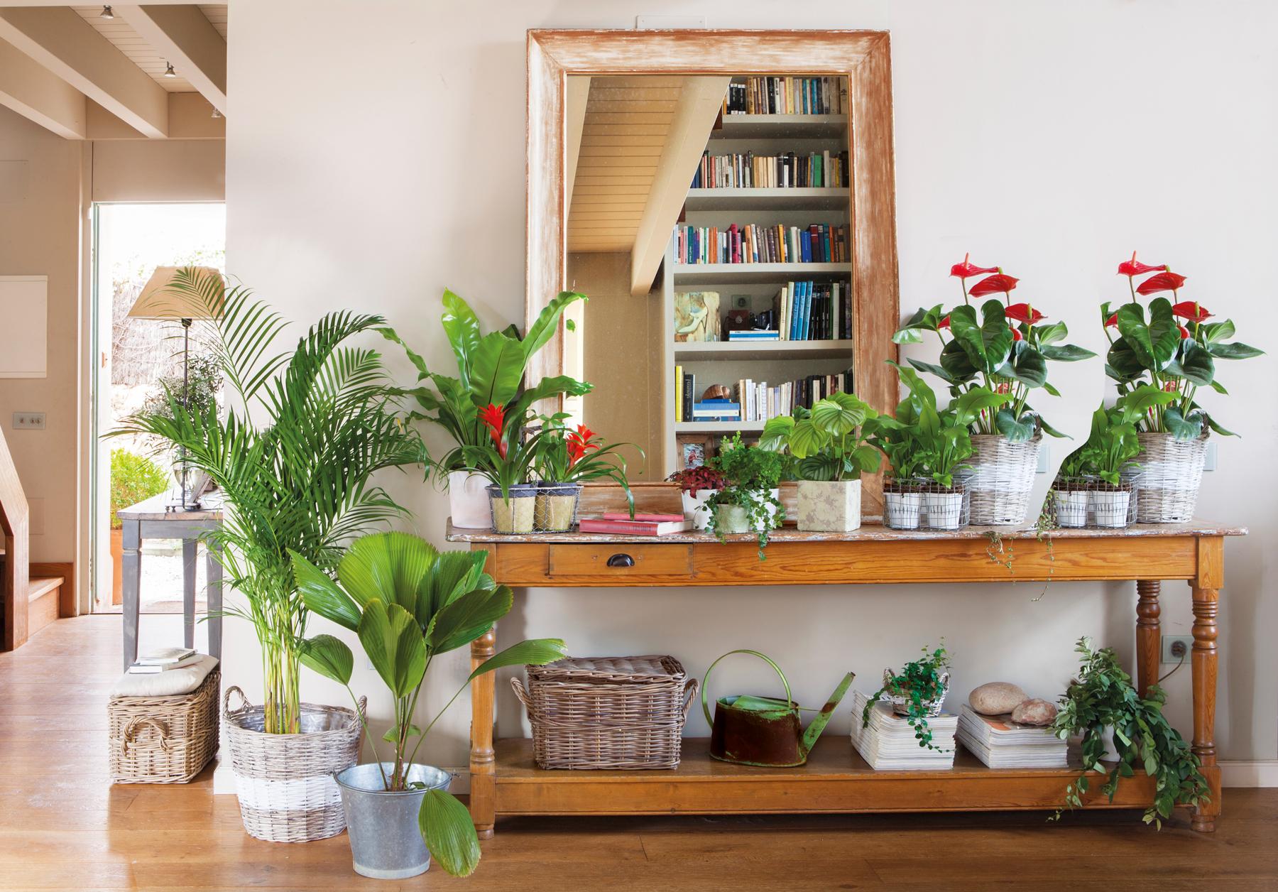 Una acogedora casa llena de plantas por todas partes for Maceteros para salon