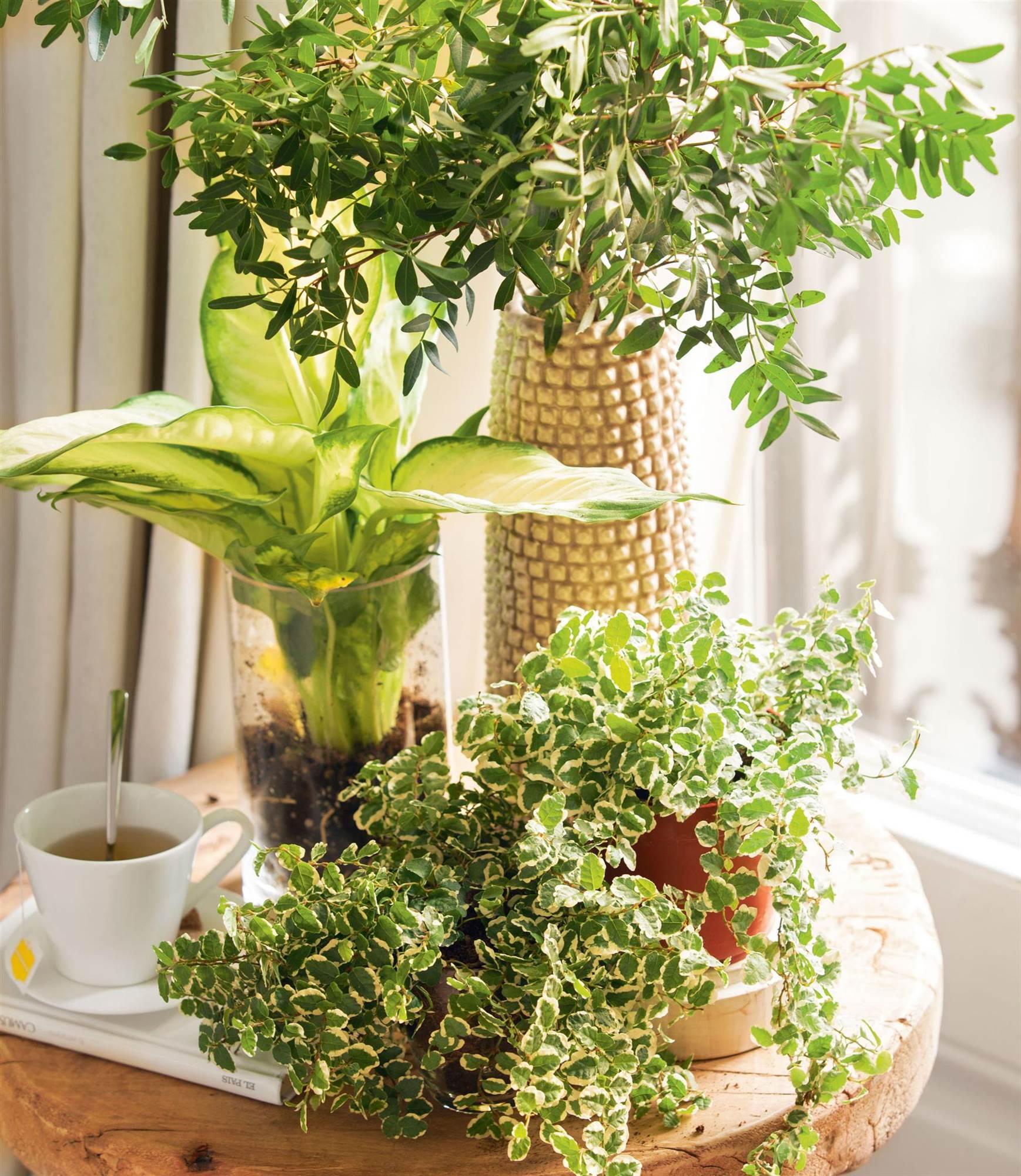 Ideas decorativas para hacer m s acogedora la casa for Ideas decorativas para la casa