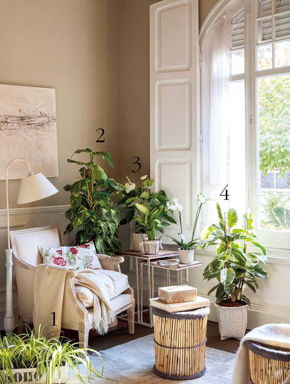 Plantas que duran todo el a o - Plantas decoracion interior ...