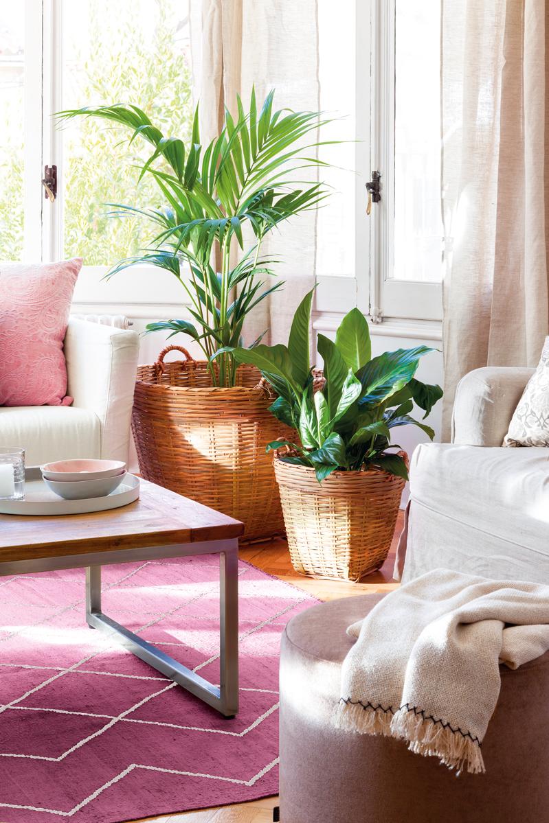 Decora tu casa para combatir la astenia primaveral - Planta de salon ...