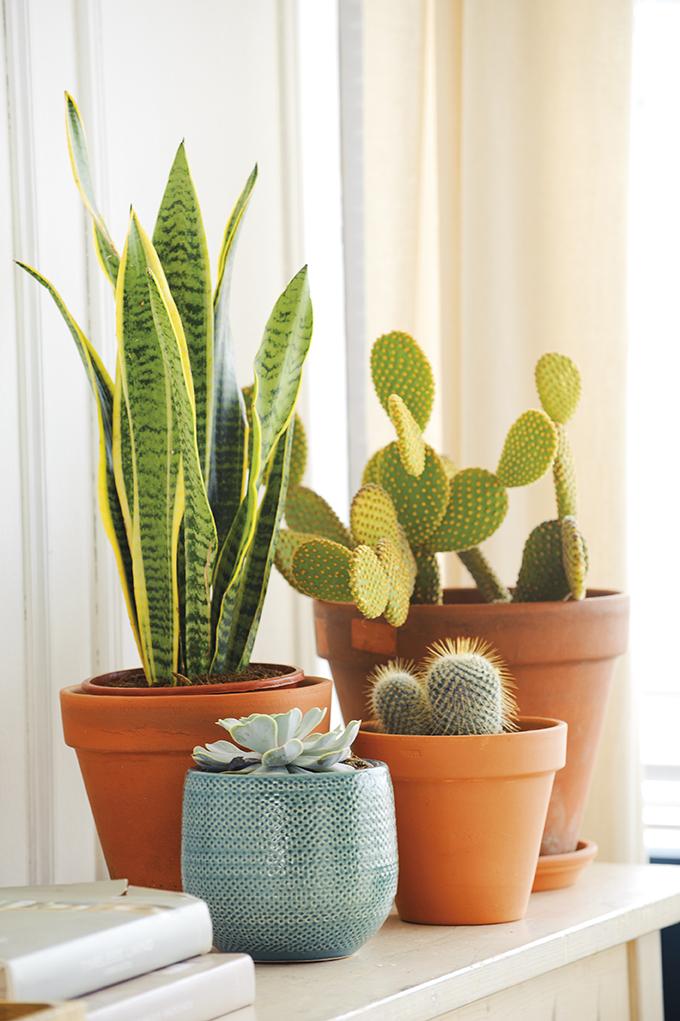 Adi s sal n aburrido hola sal n lleno de vida - Cactus en macetas pequenas ...