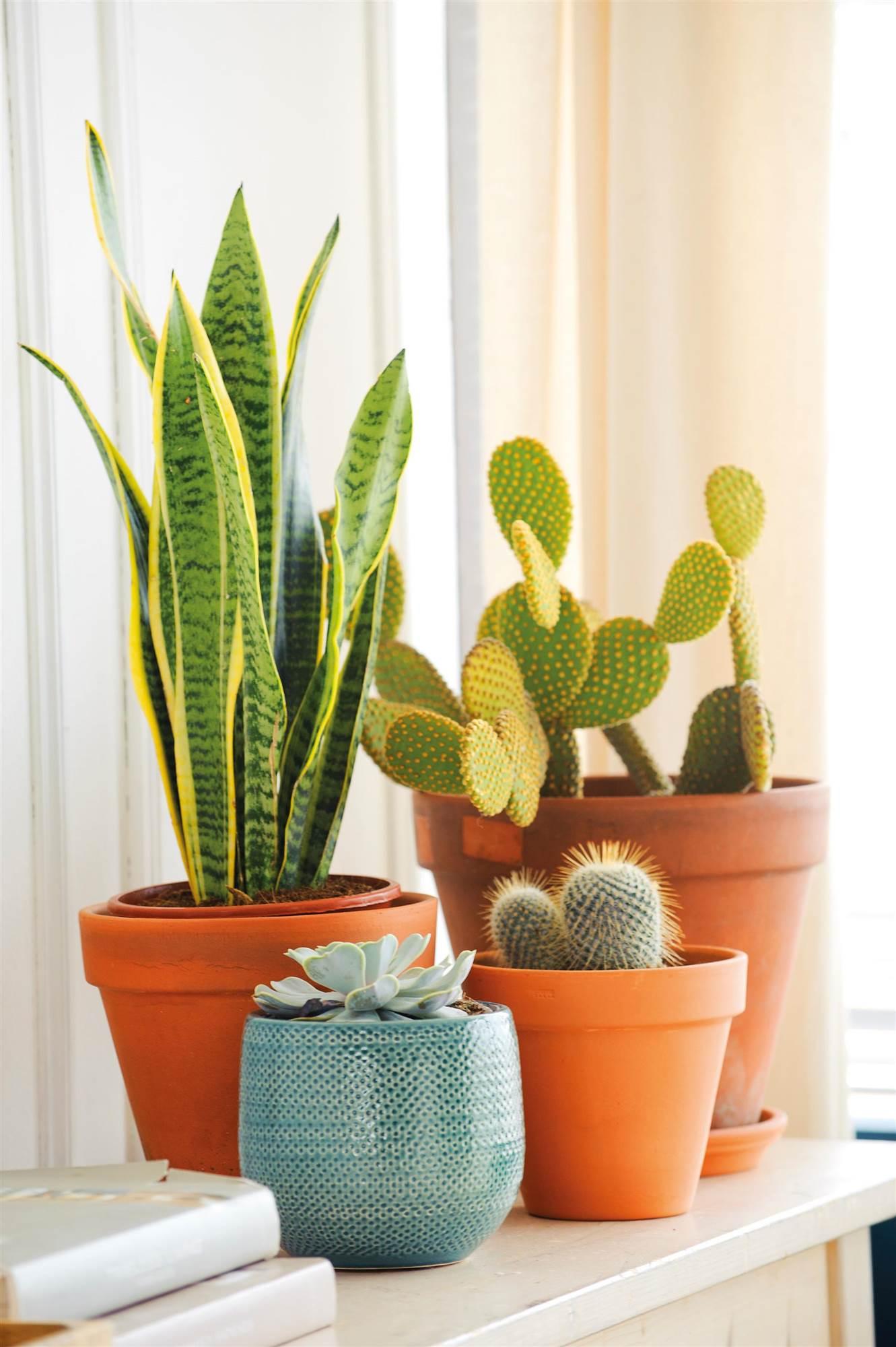 Las plantas de moda for Plantas crasas interior