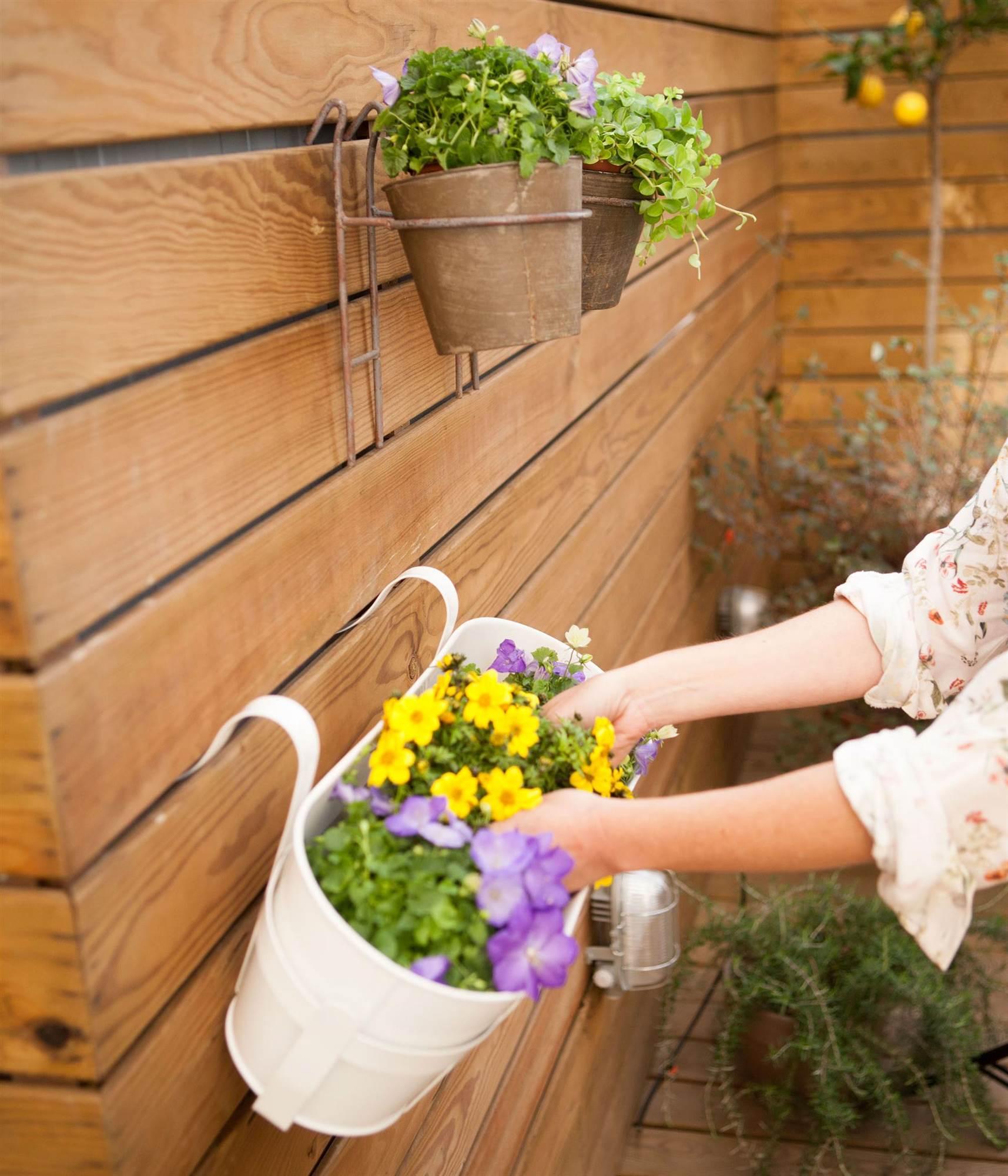 C mo decorar con plantas en casa - Macetas en la pared ...