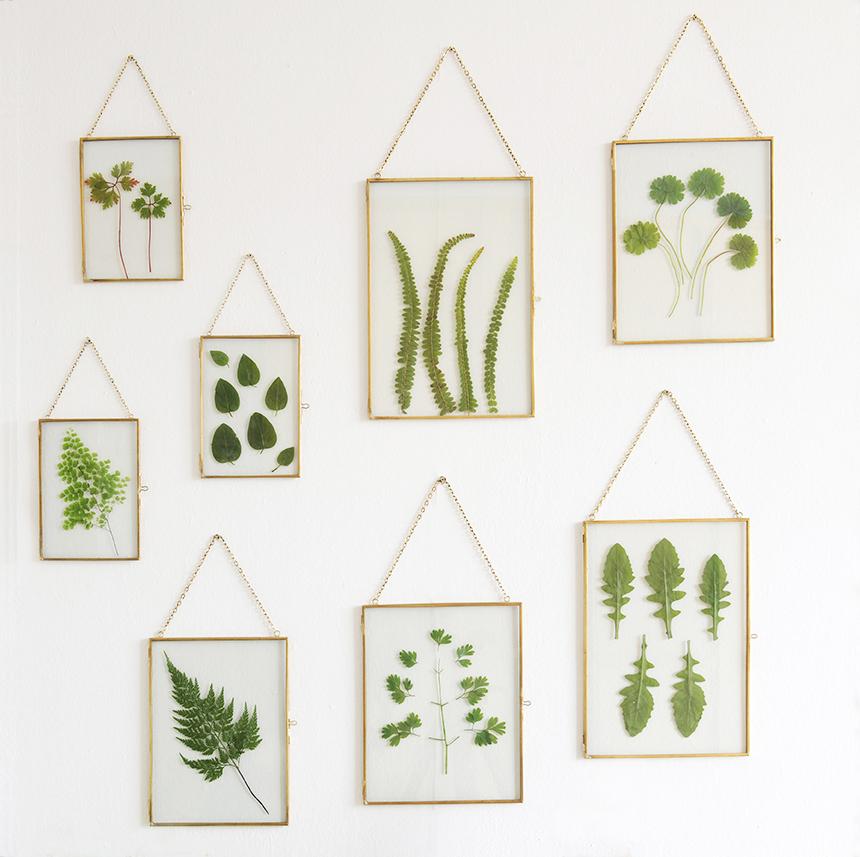 cuadros hechos con hojas de diferentes plantas y