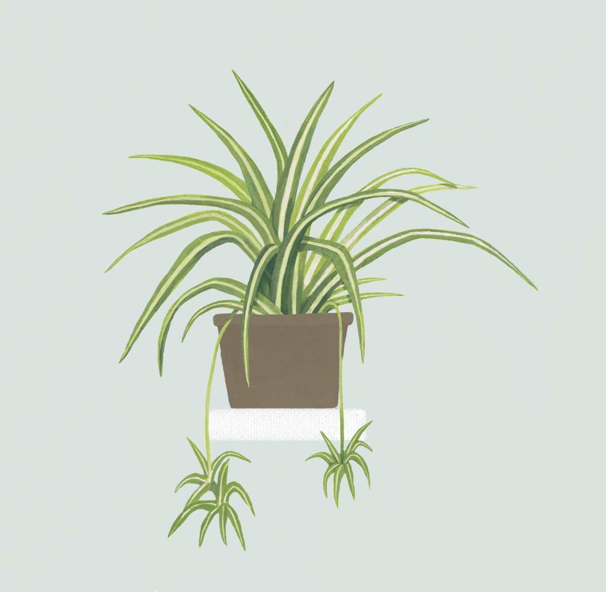 15 plantas que aportar n bienestar y salud a tu casa for Plantas de interior lidl