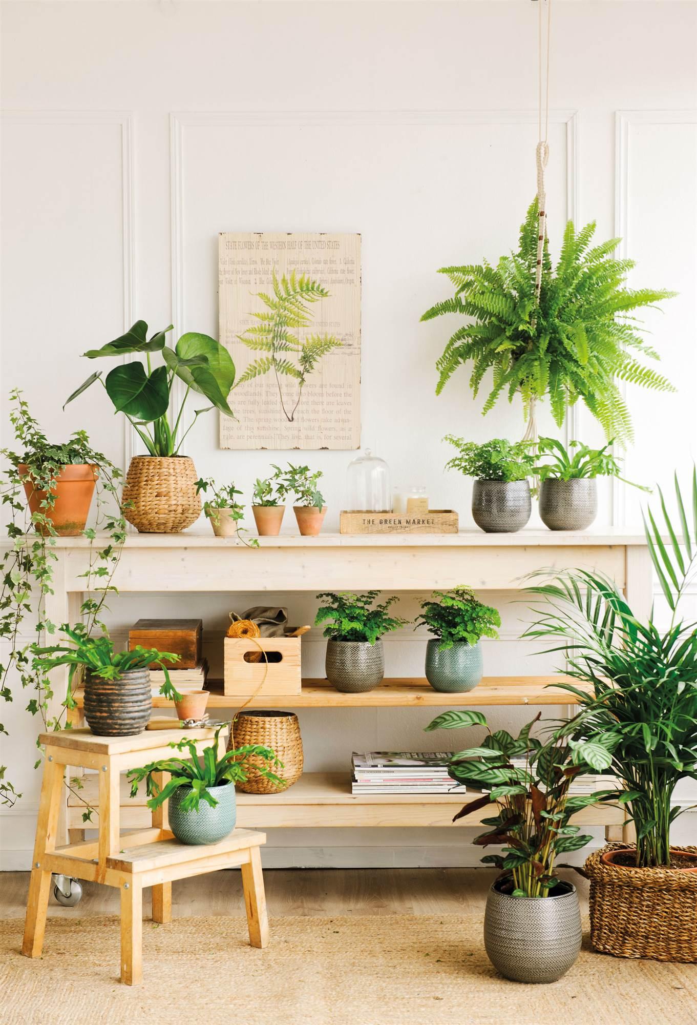 Este invierno tus plantas sobrevivir n for Maceteros para salon