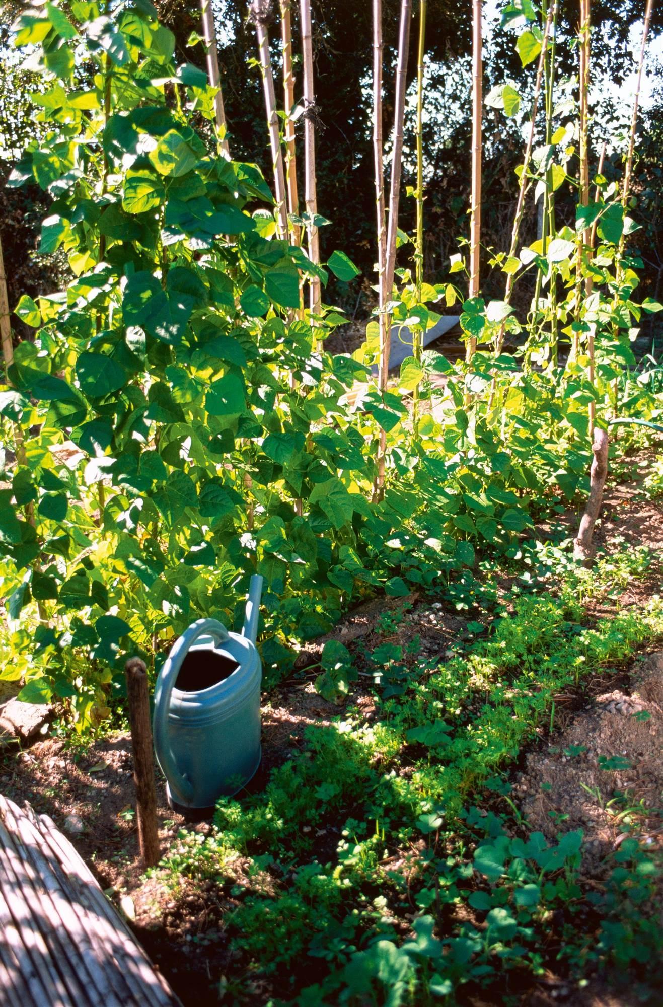 Construye una casa autosuficiente energ ticamente for Huerto y jardin