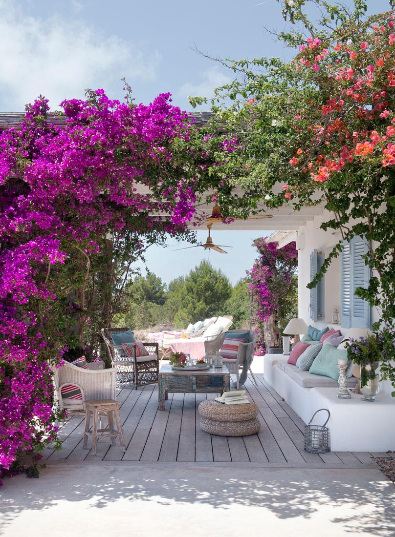 Plantas enredaderas y trepadoras para decorar la casa for Casas decoradas con plantas naturales