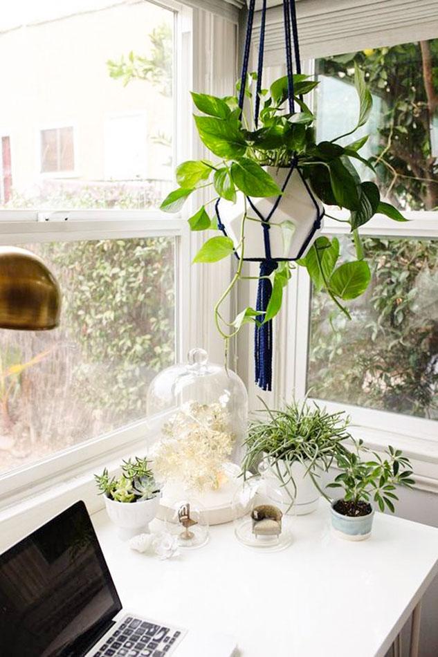 escritorio-con-plantas-y-planta-potos-colgando. Potos (epipremnum aureum)