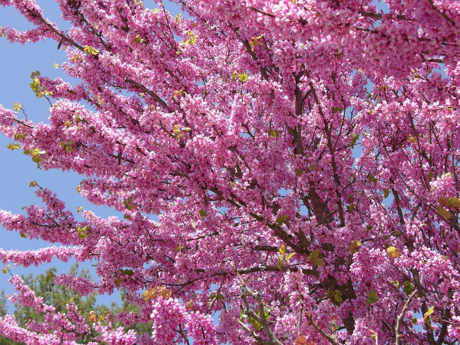 10 árboles Que Puedes Plantar En Tu Terraza