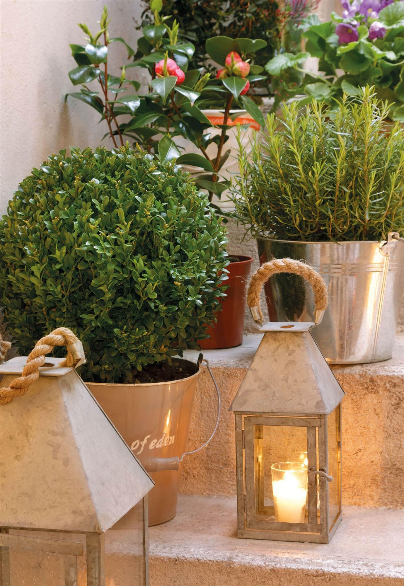 Plantas Resistentes Al Sol Al Verano Y Durante Todo El Año