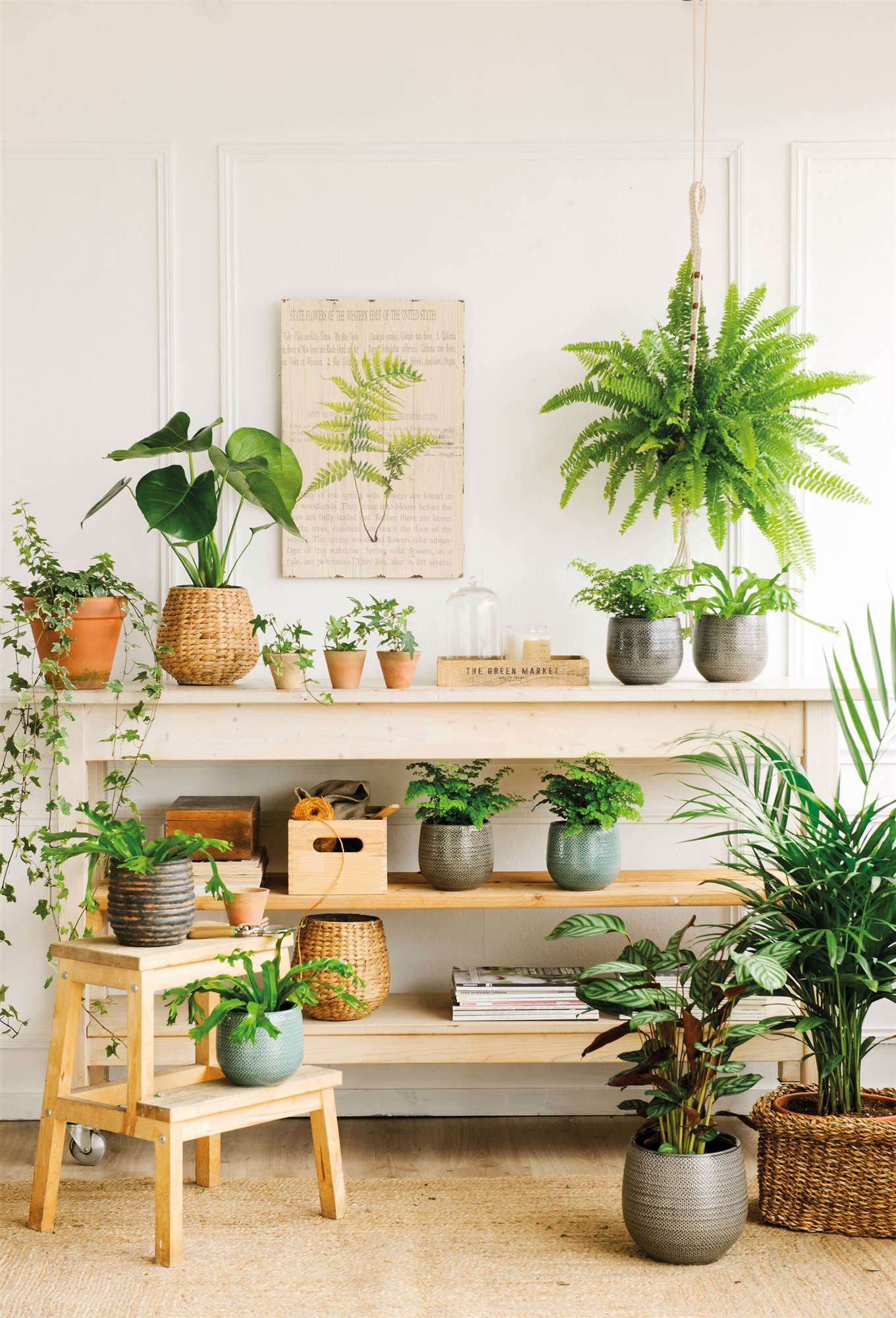 966 fotos de plantas - Estanterias para plantas ...