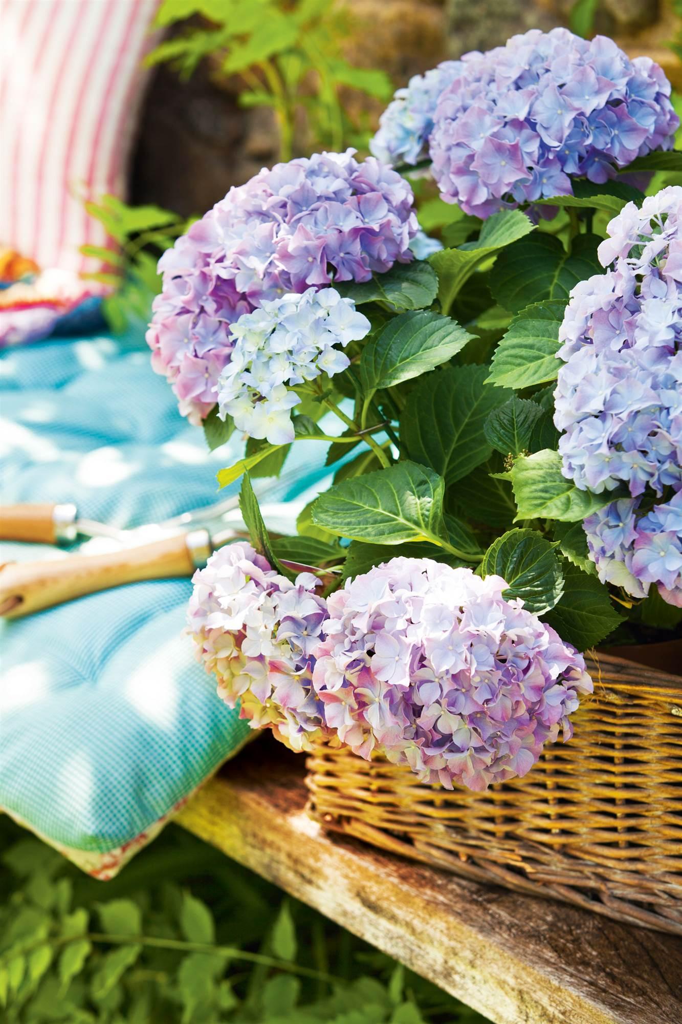466 fotos de jardines - Cuidar hortensias exterior ...