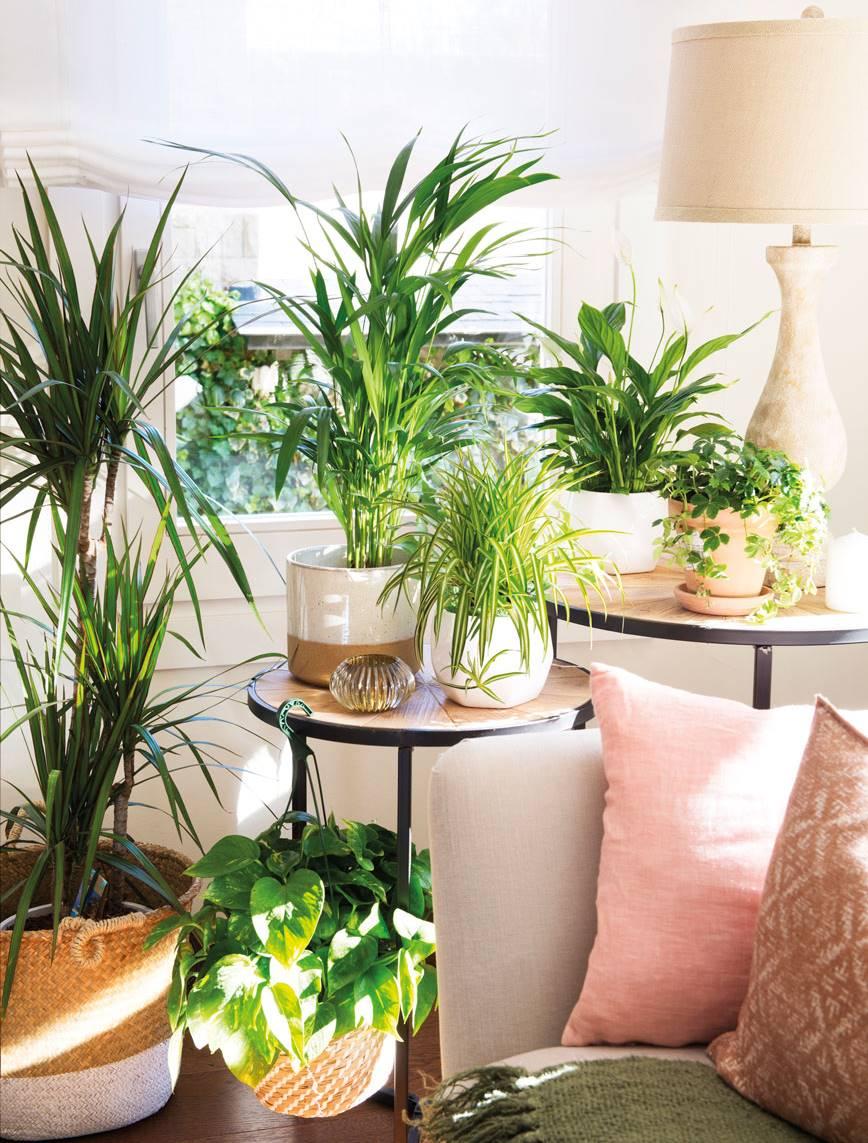 C mo conseguir que tus plantas sobrevivan y no mueran for Decoracion con plantas en living
