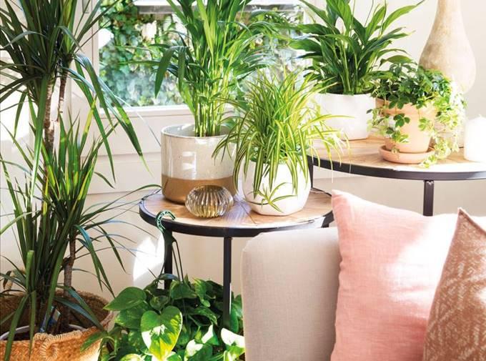 Como Conseguir Que Tus Plantas Sobrevivan Y No Mueran - Plantas-de-interior-verdes