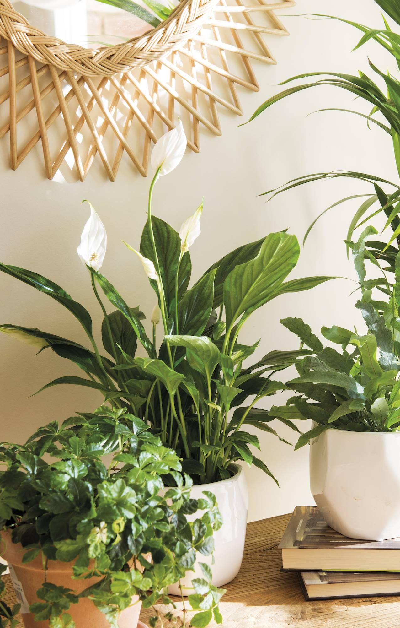 Flores y plantas de oto o para tu casa y tu balc n for Plantas minimalistas para exteriores