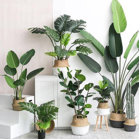 Plantas Artificiales O Naturales