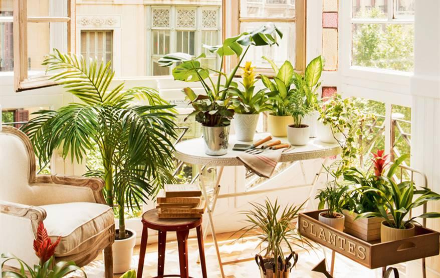 Las mejores cuentas de Instagram de plantas