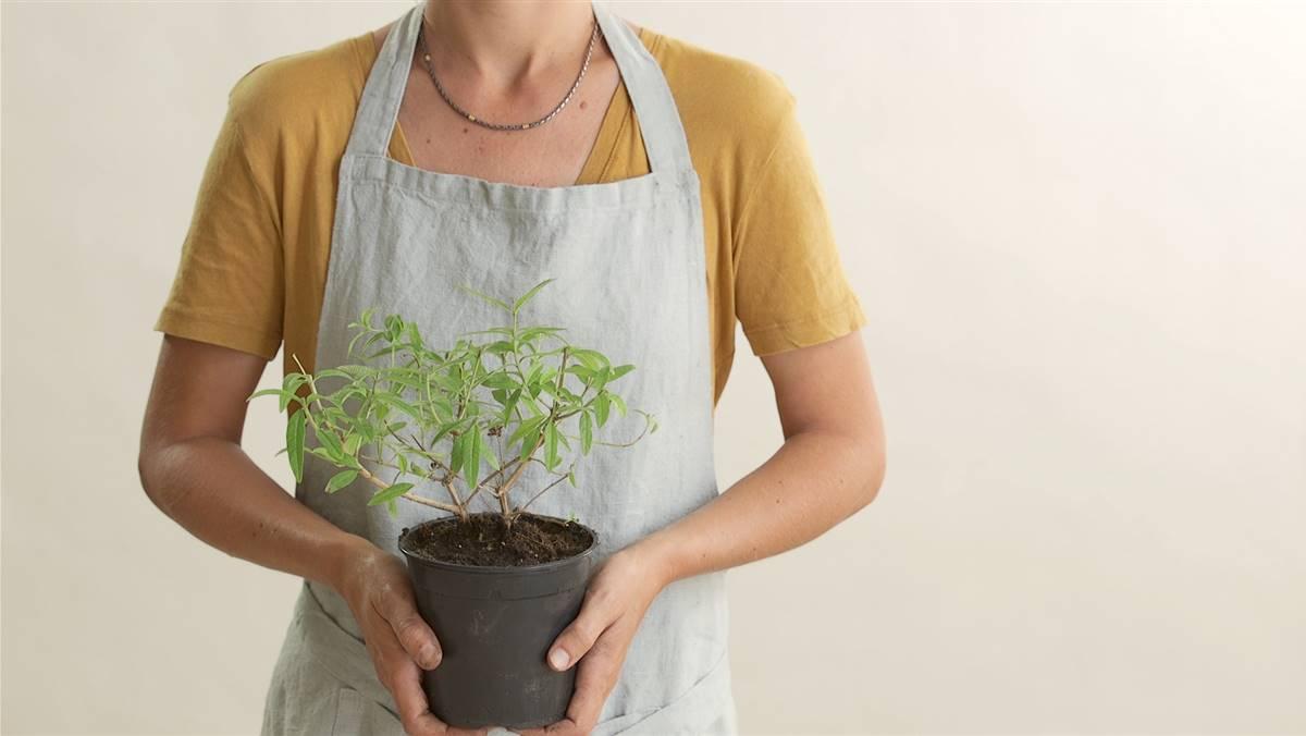 Plantas: cómo y cuándo trasplantar