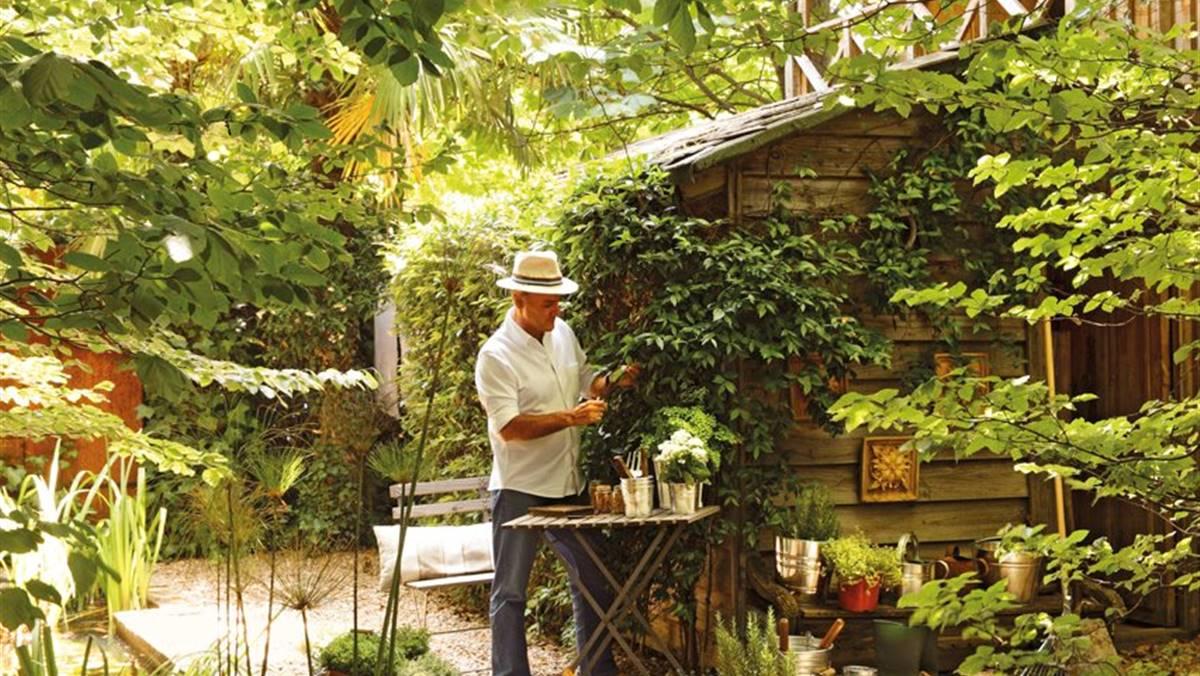 Plagas Y Plantas Cómo Eliminarlas Y Prevenirlas