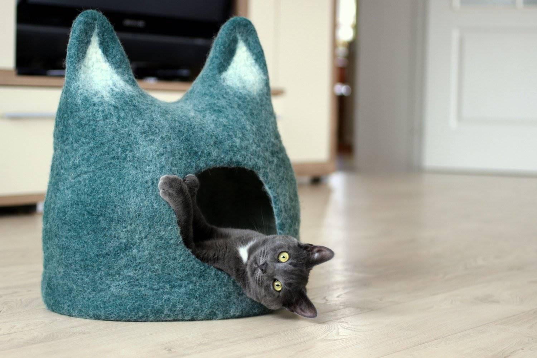 Lo que debes tener y lo que no en una casa con gato