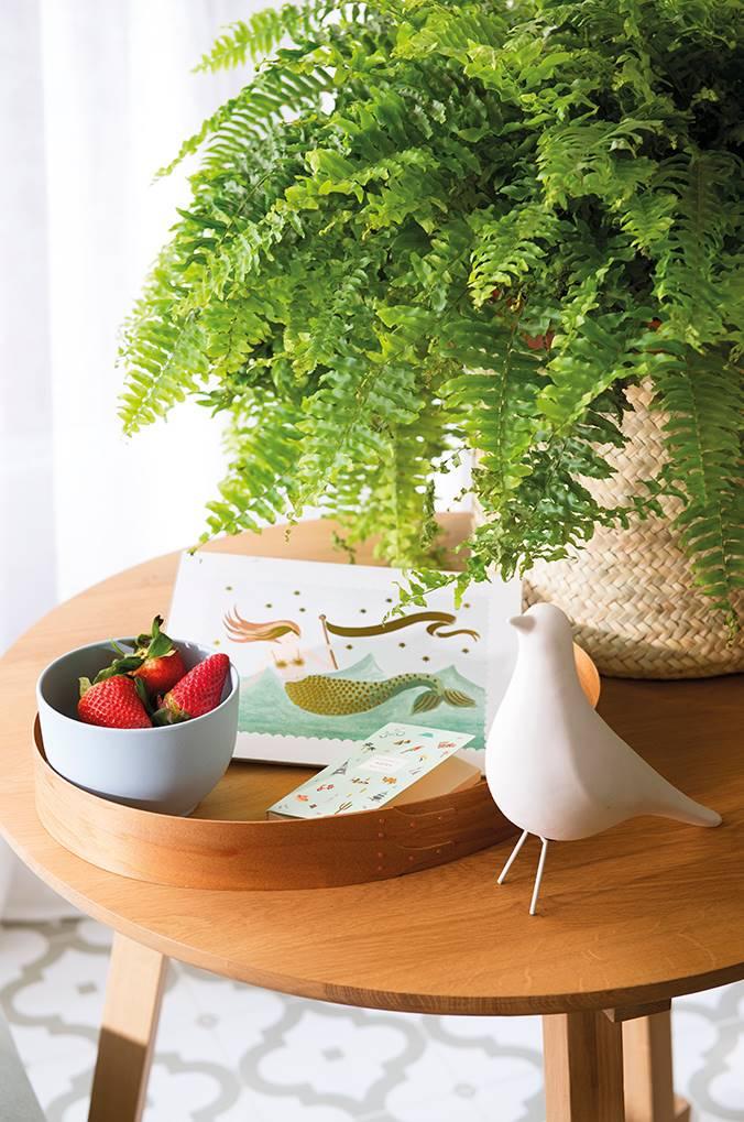 Helechos y frutas. Novena: plantas y más plantas
