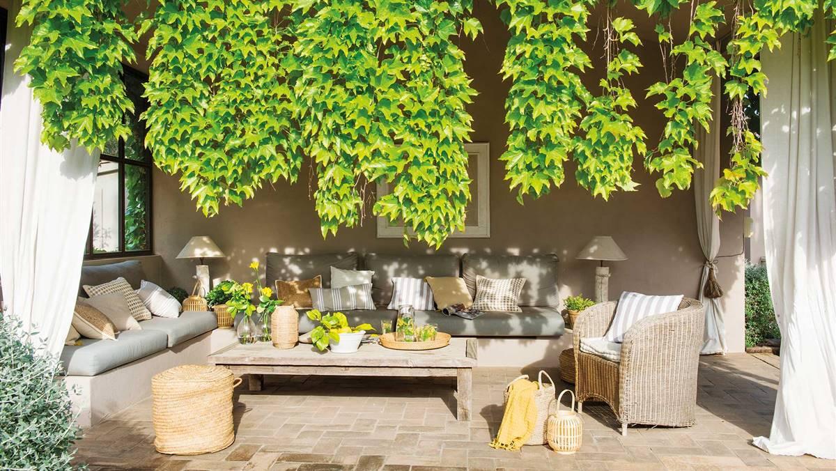 30 porches y terrazas con enredaderas y plantas trepadoras