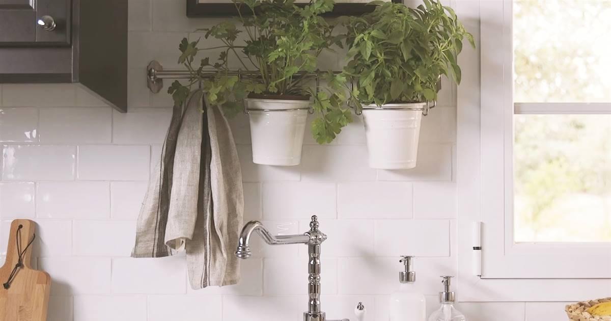 Plantas arom ticas como tenerlas a mano en la cocina - Plantas aromaticas en la cocina ...